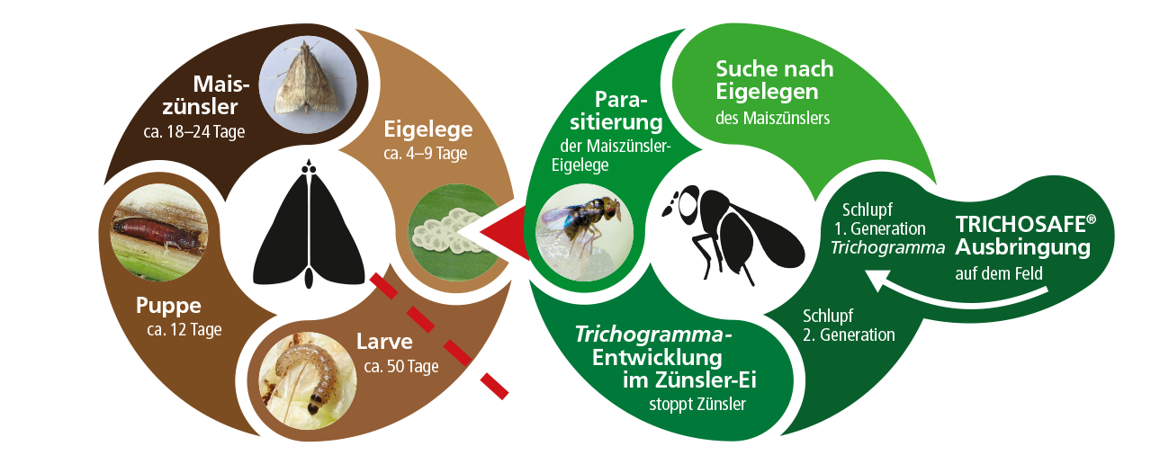 biocare wirkprinzip